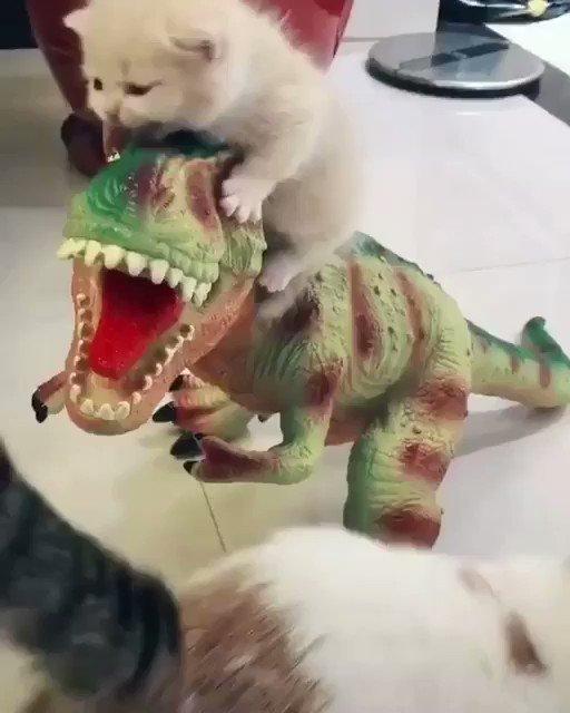 恐竜の人形にしがみつくのに微笑ましい