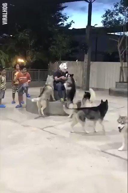 ✨犬の被り物しただけで大人気😂ww