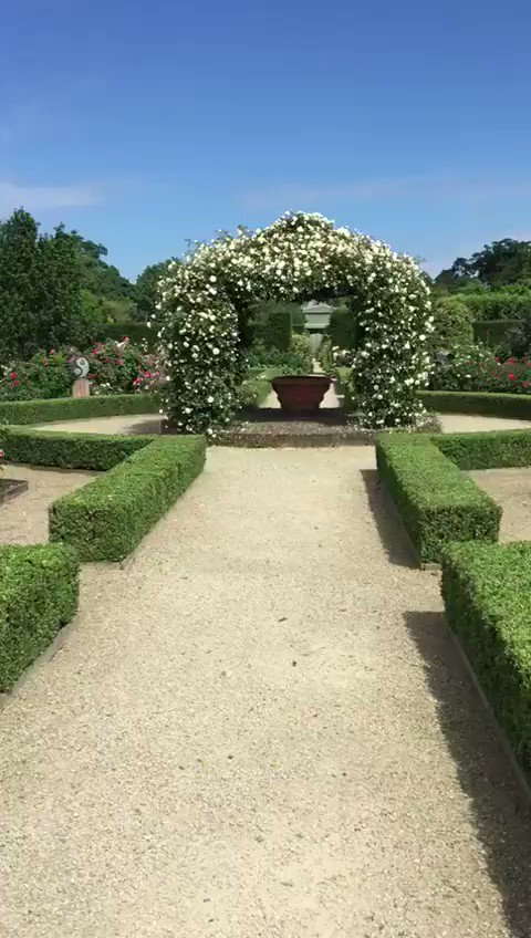 Walk in the rose garden today. Even better when you can smell the scent! #RoseGarden #walledgarden #SurreyVenues #placetovisit