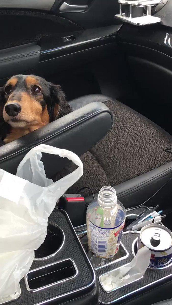 他の犬と遊んでたら怒られたw  謝ったのに。。。