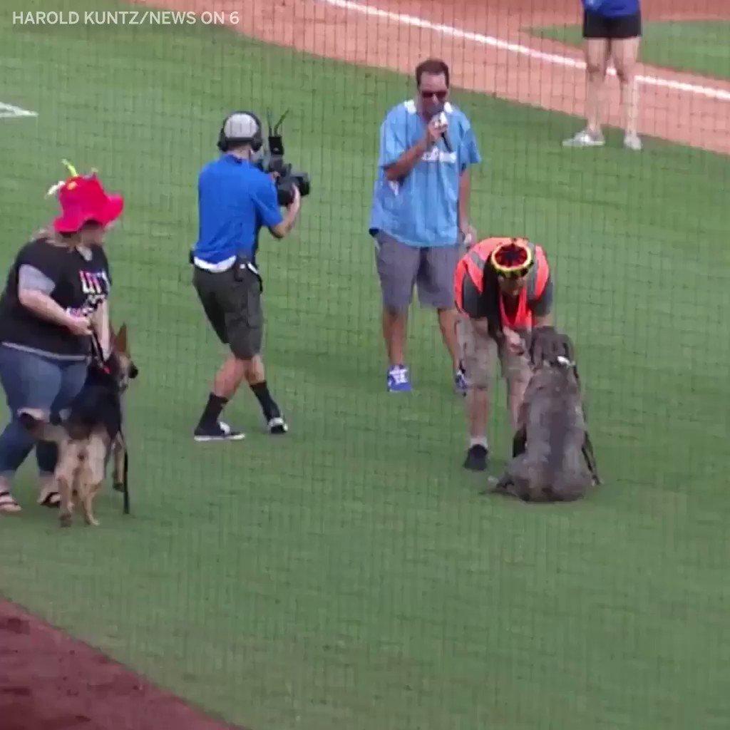 This pup takes his ball boy job VERY seriously ��   (via @HaroldRKuntz3) https://t.co/ldhRvra9tv