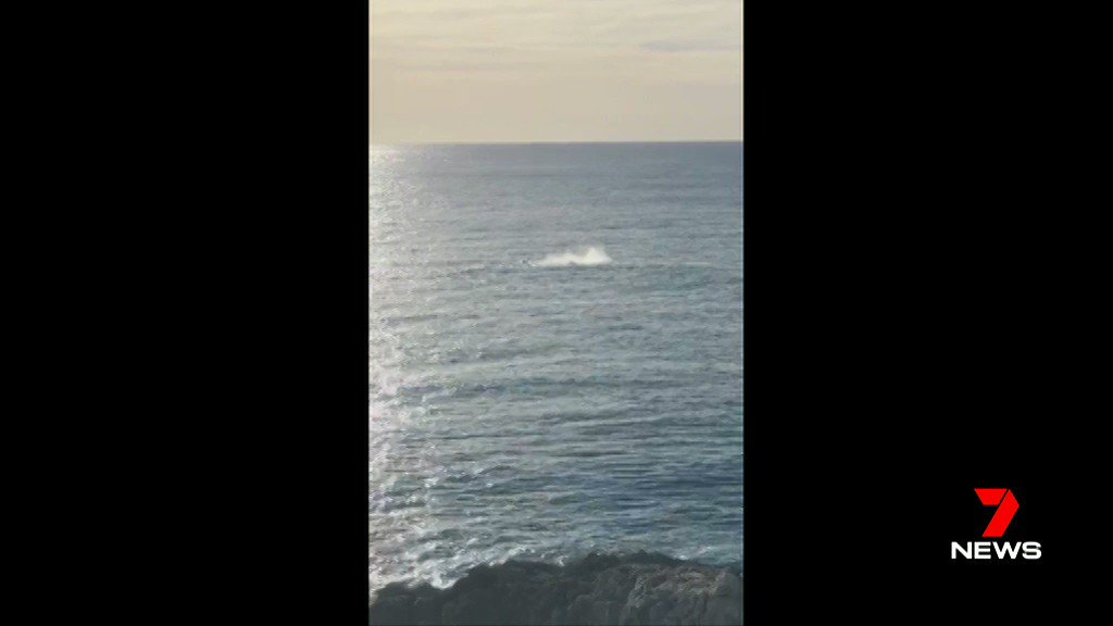 Image for the Tweet beginning: Whales spotted off North Stradbroke