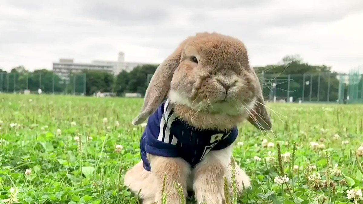 PuiPui the bunny's photo on #WorldCup