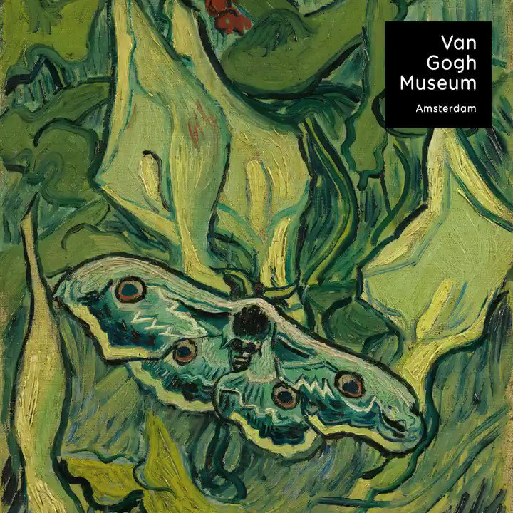 Vincent: 'Yesterday I drew a very large, rather rare night moth there which is called the death's head, its colouration astonishingly distinguished: black, grey, white, shaded, and with glints of carmine or vaguely tending towards olive green; it's very big'. #VanGoghJapan