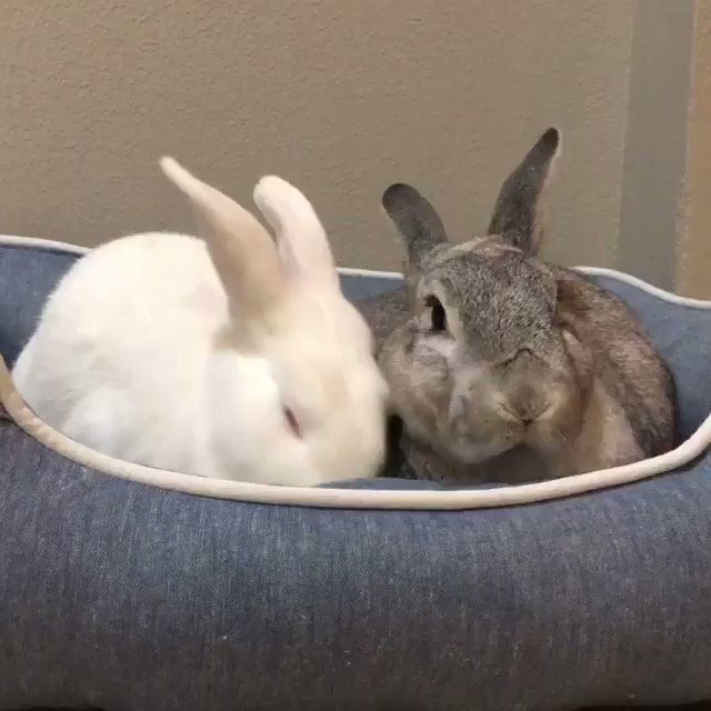 We're hopping around (and hanging out) with the Puffytails Trio on IGTV. ������ https://t.co/BMRm1NuwC1 https://t.co/MsG3ZU4mVz