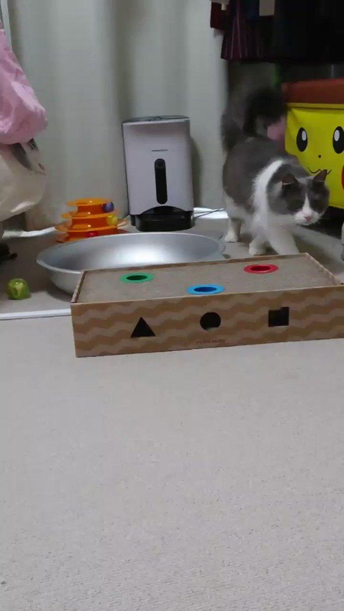 うちの猫が自動給餌器からカリカリ出そうと助走つけて体当たりしてて飼い主は引いてる