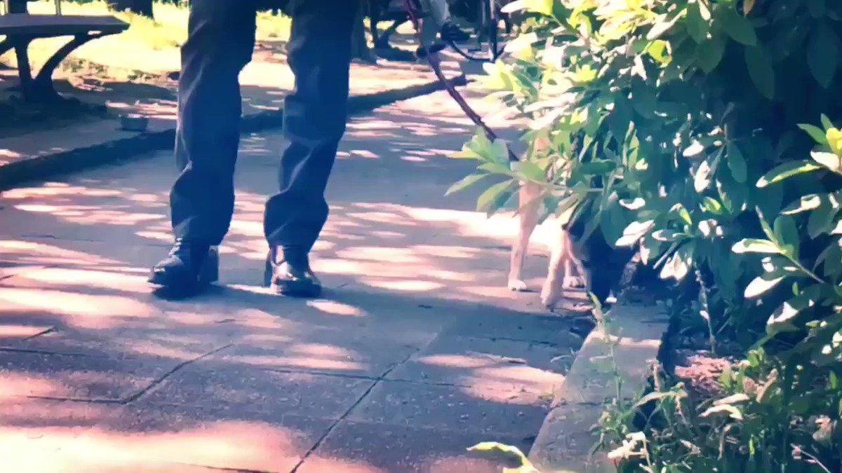 【コスプレ・DC・動画】 トリプルフェイスと柴犬  安室:ウィル P:嘉瑞さん(@ikki4423 )  ※撮影許可済み