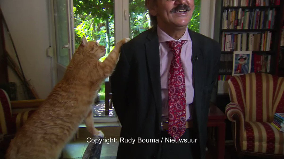 Academic gives totally normal TV interview with a cat on his head