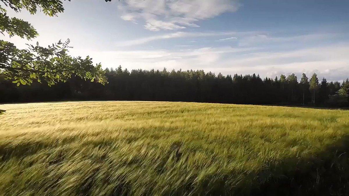 анимация картинки ковыль священный прутняк обыкновенный