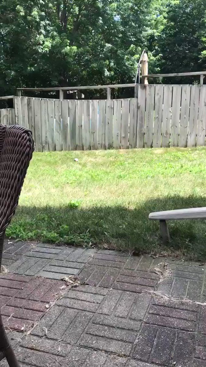 A fence can't stop my two-year-old from playing with his new best friend.
