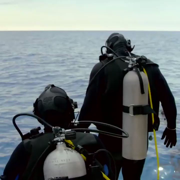 Gronk went diving in the Bahamas and hit the 'Shark Dance.' https://t.co/FK3dUKpUEg