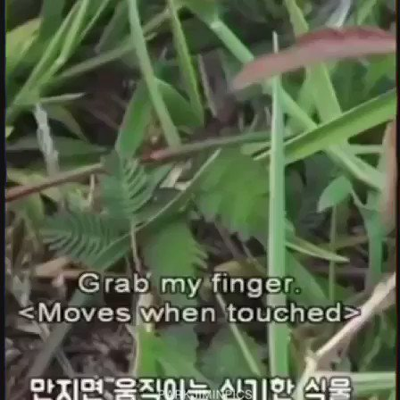 jimin being fascinated by plants 🌱