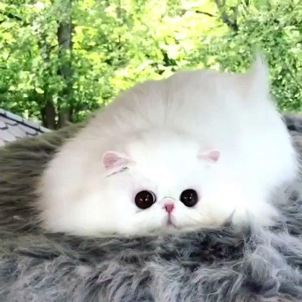 картинки с самыми милыми котятами в мире с призраками менее