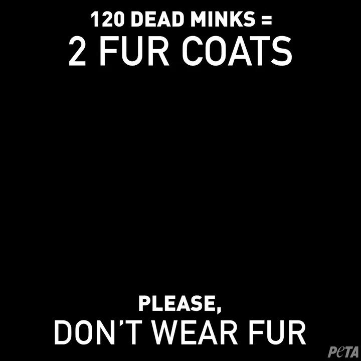 Image for the Tweet beginning: Humans would NEVER wear fur