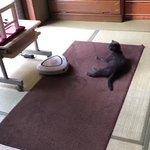 可愛すぎるから猫好き以外の人もぜひ見てwお掃除ロボットと猫の笑える動画w