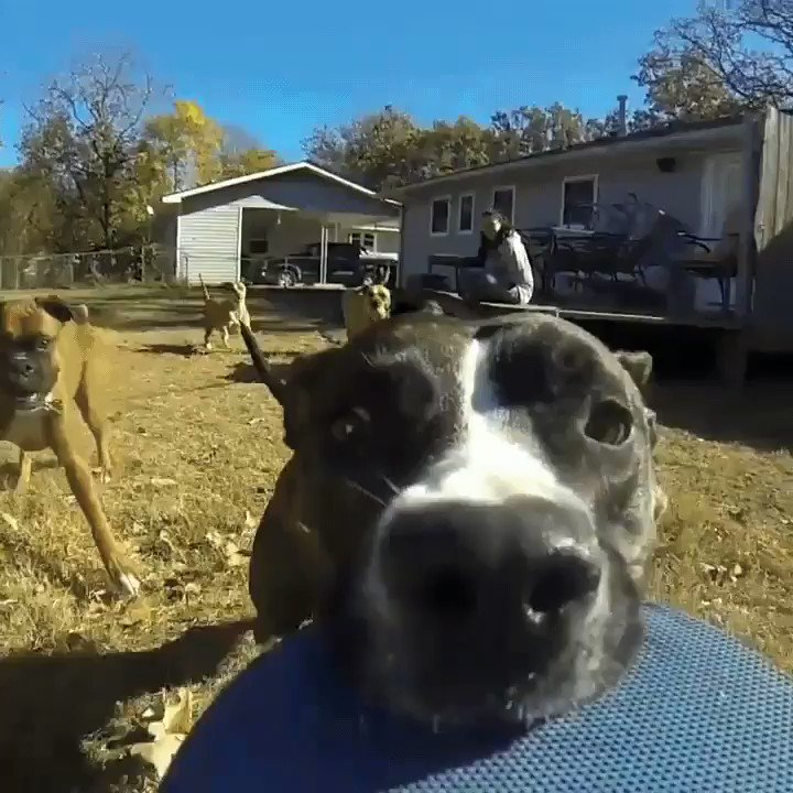 Bless this doggo who stole a GoPro