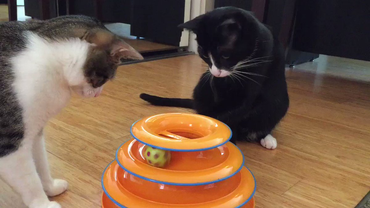 Kitty scientists Ariel and Caliban working out the laws of circular motion. https://t.co/h55wEI3yoP