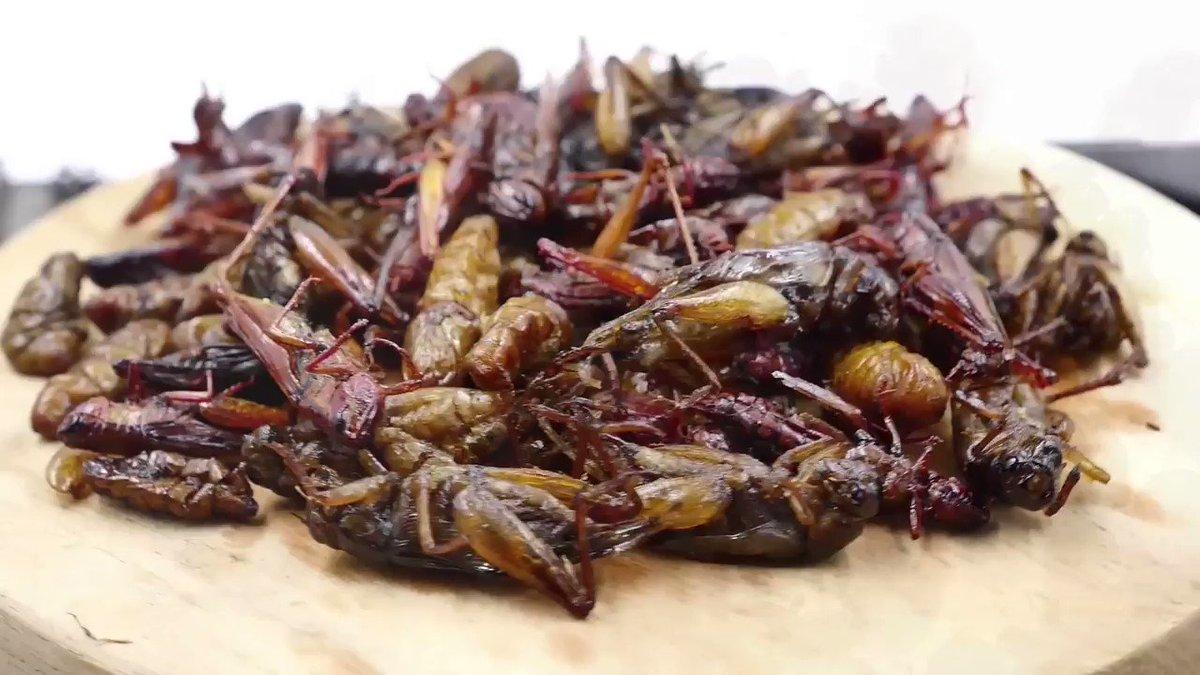 asian-bugs-that-eat-furniture
