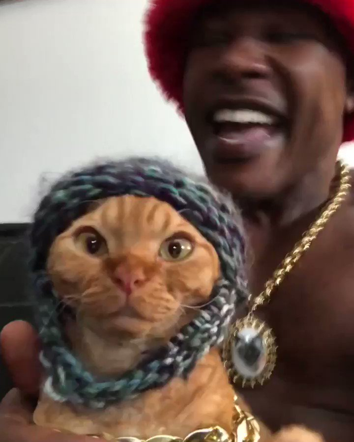iAmMoshow - The Cat Rapper ™'s photo on #TheseLyricsChangedMyLife