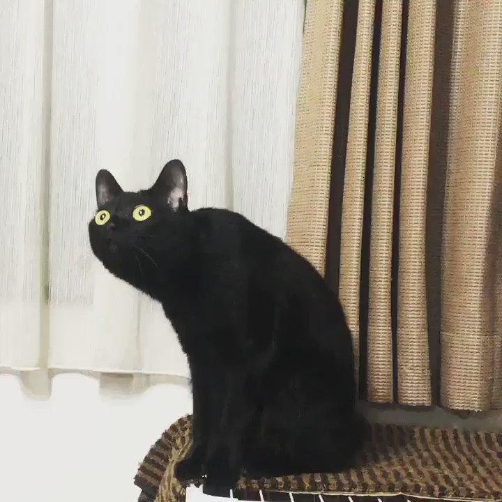 「黒猫はインスタ映えしないから保護猫のもらい手が少ない」という信じられない記事を目にしたので、黒猫がどれほどインスタ映えするかのビデオ「マーラーと黒猫」を再投稿。 黒猫万歳!黒猫ハンパない可愛さ。