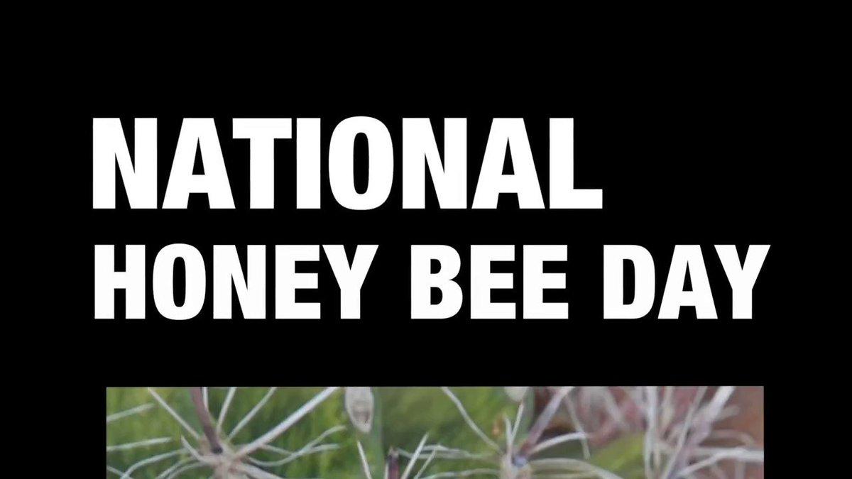 Image for the Tweet beginning: Happy National #HoneyBeeDay! 🐝