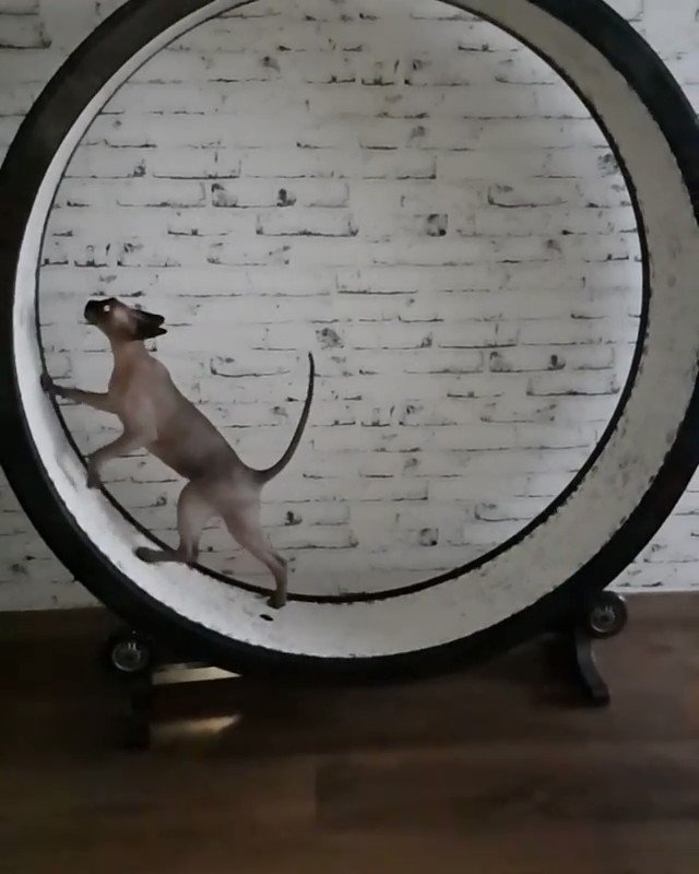 Crinkle and Wrinkle take a few laps for #WHPcircles. �� �� https://t.co/SWNLOmvRMA https://t.co/M0NVUDOxSh