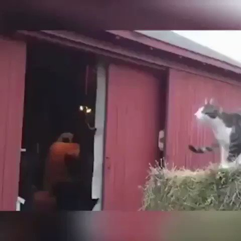 If there is one thing that can put a smile on my face, it is a cat doing a fail jump 😆