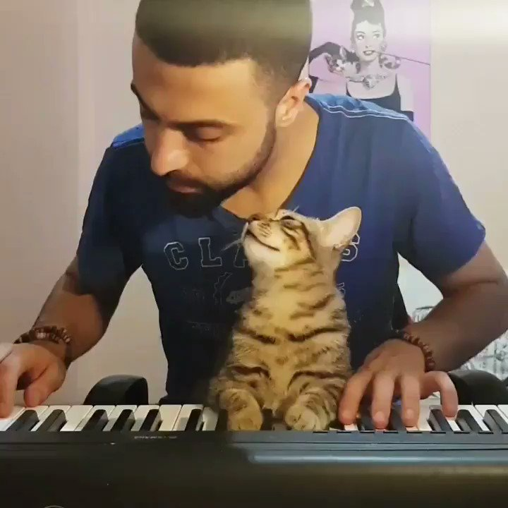Find someone who supports you like this cat supports his owner's music