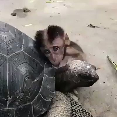 Two different species, the same heart...