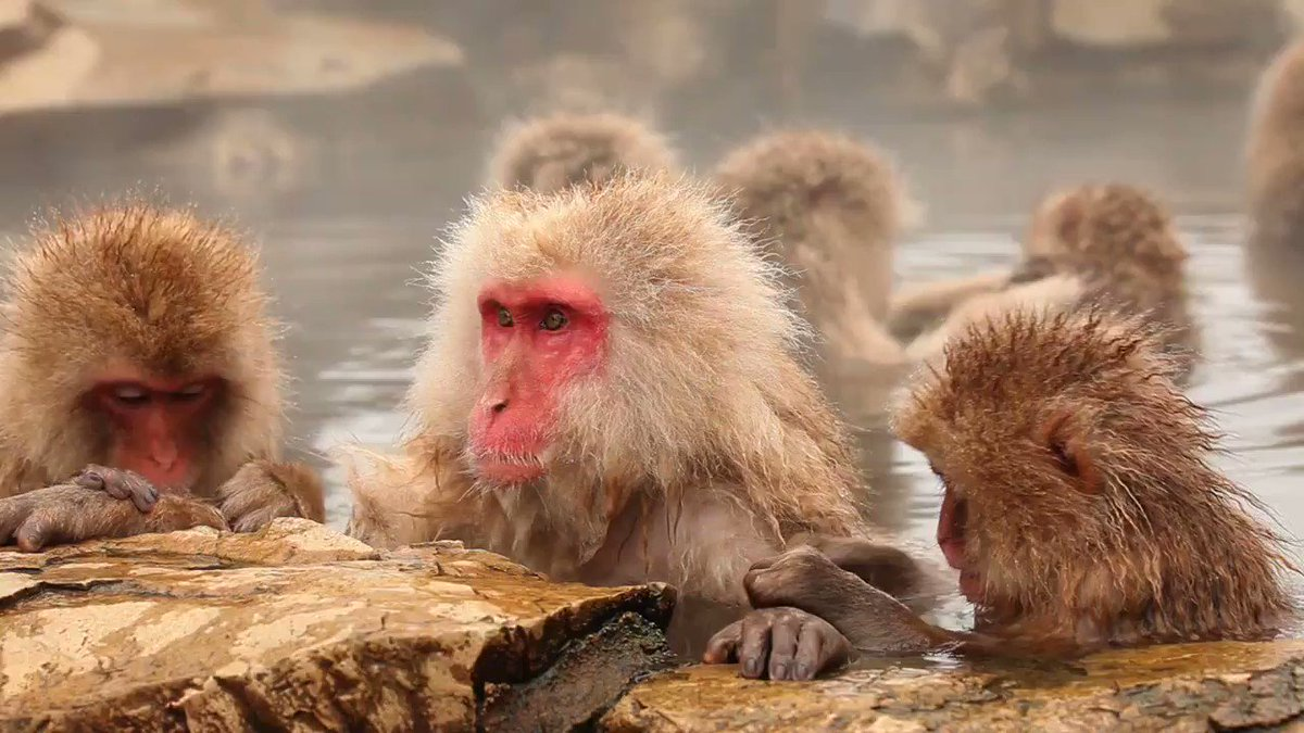 Fancy being as warm as a monkey in a hot spring? Smart, efficient heating from funkyheat. #heating #infraredheating #funkyheat  https://t.co/SgN8vGw6KK