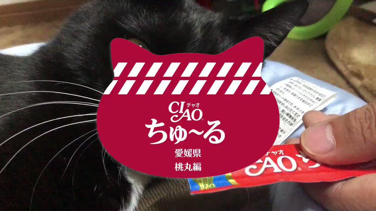 チャオ チュール 子猫