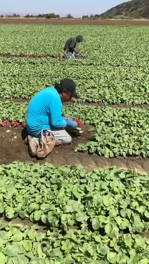 The next time you enjoy radishes in your salad, remember the farmworkers who harvest the food that we eat.