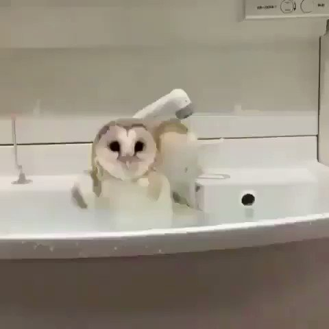 Me having practice arguments in the shower that will never actually happen.