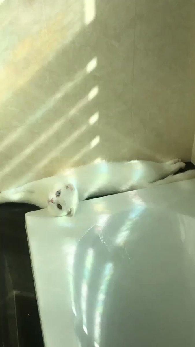 เมื่อน้องมาแอบงีบที่ห้องน้ำ แล้วแบบมีรุ้งๆด้วยแง้ หมั่นไส้ 🌈⛅️✨
