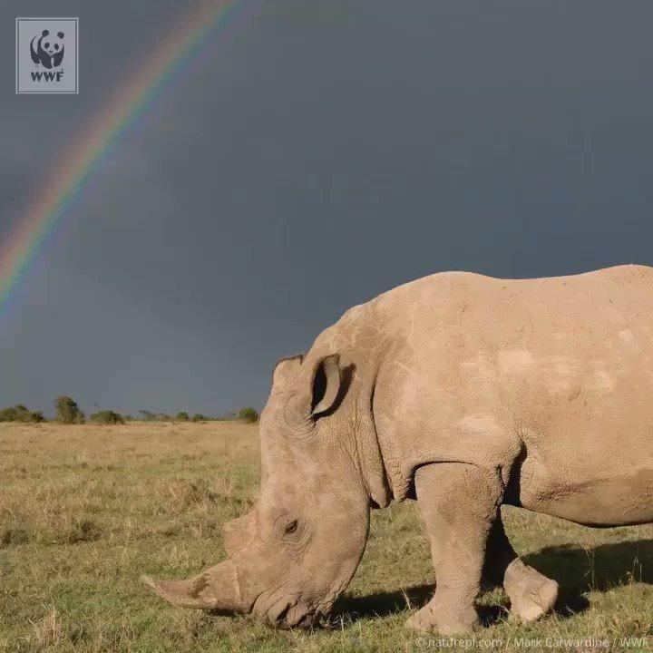 Happy #WorldRhinoDay! ❤️�� https://t.co/uTDAZjjSCP