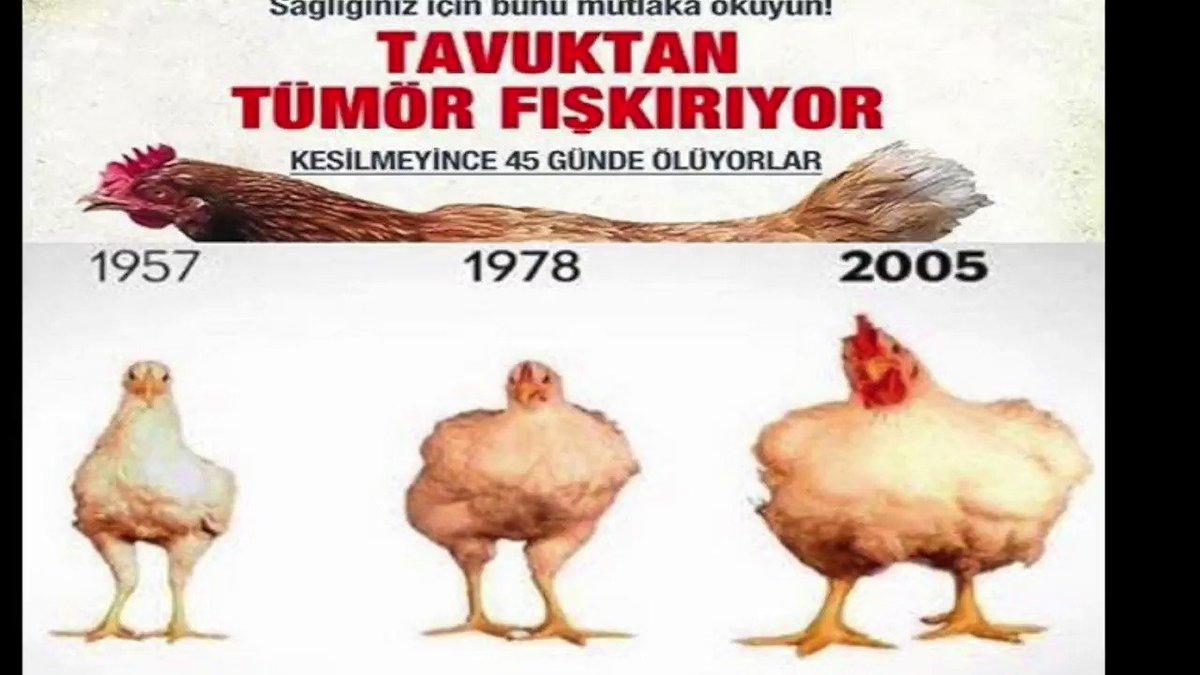 Tavuktan Tümör Fışkırıyor