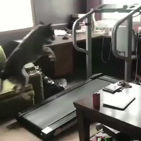 ランニングマシンで駆け回る犬とやる気のない犬✨