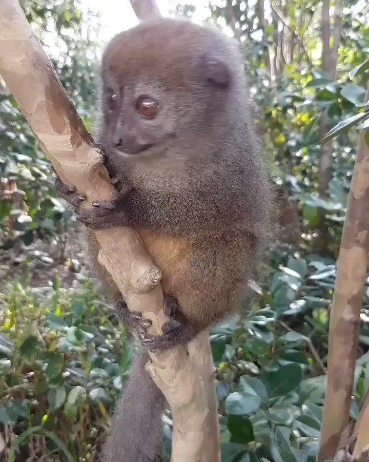 E voi #mortino lo conoscete?! #holiday #Africa #Madagascar #travel #SaturdayNights #Remember #vacanze #vacanze2018 #Viaggiare #experience #explore #animallover #animal #Nature #photography #Video #nice #lovely #sweet #little #heart #occhionidolci #turisti_nati  - Ukustom