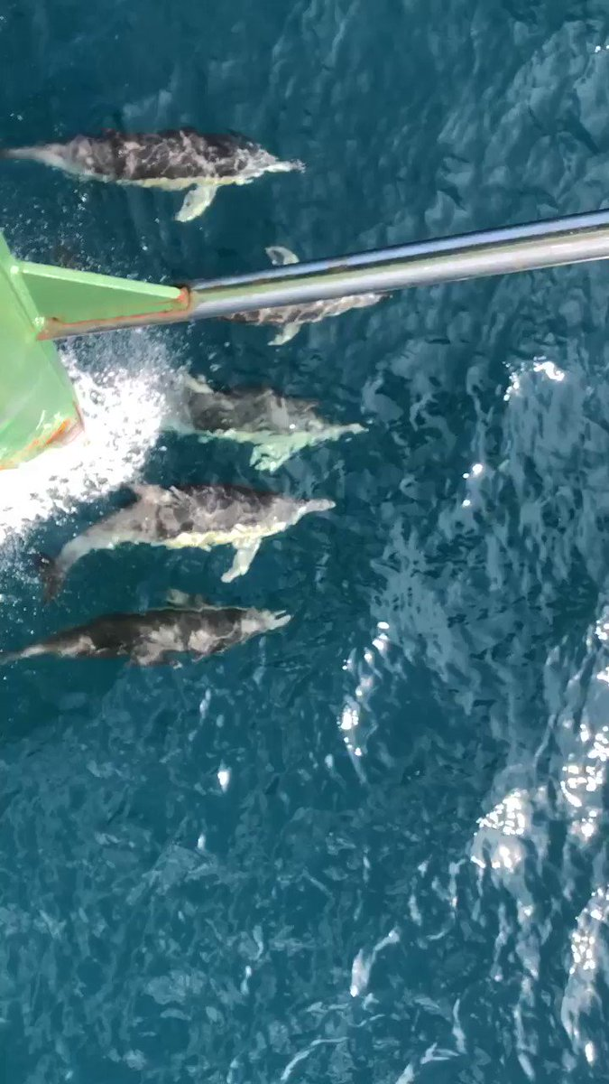 Tom Hall ⛵️'s photo on The Dolphins