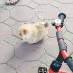 子供だから体力がない??途中で力尽きて休憩する子犬
