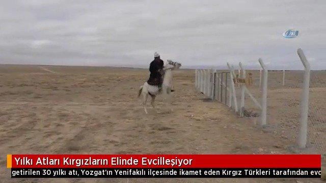 Yozgat Haberleri On Twitter Toros Dağlarından Getirilen 30 Adet