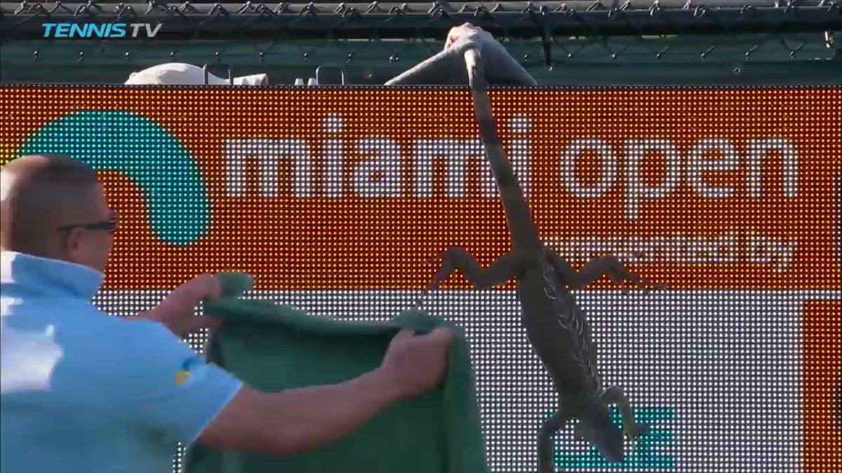 It's #WorldAnimalDay! #tbt to when Godzilla went streaking at the Miami Open #TieBreakTens @TennisTV