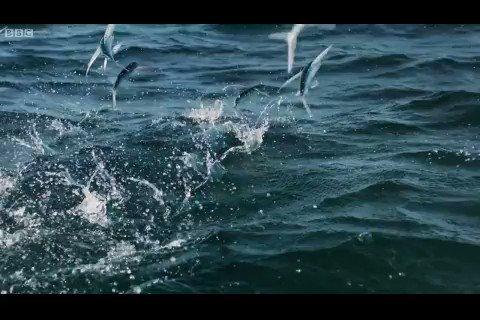 Rabbimin Kudreti, ihtişamı her zerreyi kuşatmış ve hükmü altına almıştır; Balığı karada yürüten de, havada uçuran da Odur. 🍁 Seyreyle Güzel Kudret-İ Mevla Neler Eyler Allaha Sığın Adl-İ Taala Neler Eyler.