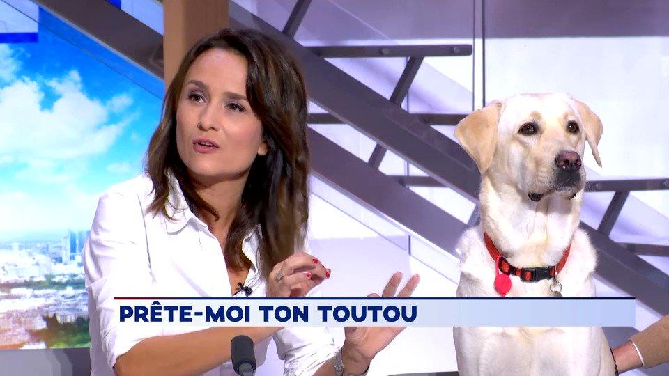 🐶🎾Pour sa chronique, @SoleneChavanne vous présentait le site empruntemontoutou.com pour prêter son chiens à dautres internautes. A cette occasion, Matcha, une femelle labrador, sest invitée sur le plateau...