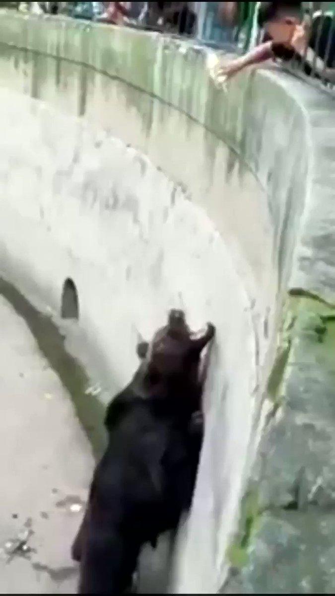 This is why I don't go to the zoo https://t.co/70R237Fizq