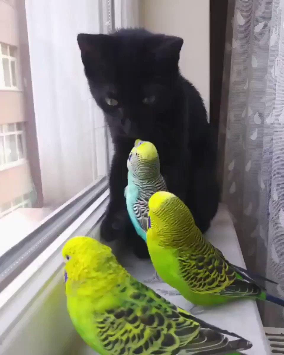вот картинка попугай за окном участвовал конкурсах