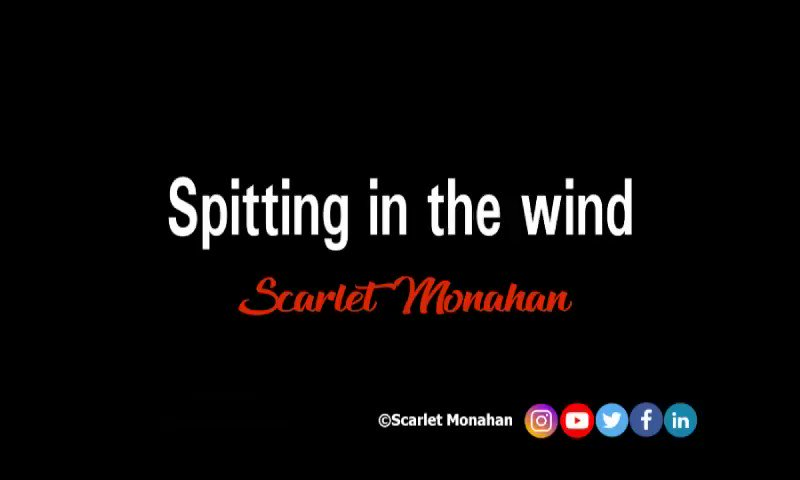 Spitting in the wind. #poem #poetry #poet #audio  #art #words #wordsmith #poetrypublisher #artist #writer #BookWorm #publisher #scarletmonahan #publishing #seagull #gulls  35