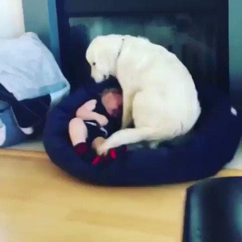 犬「辛いときは僕がそばにいてあげるワン!」