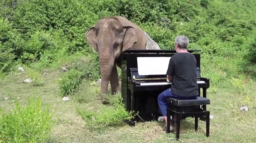 """Music is the primordial language of life. That is why we love it so much. Actually every animal can hear and understand music better than we do."" ... 💌 #MondayMotivation"