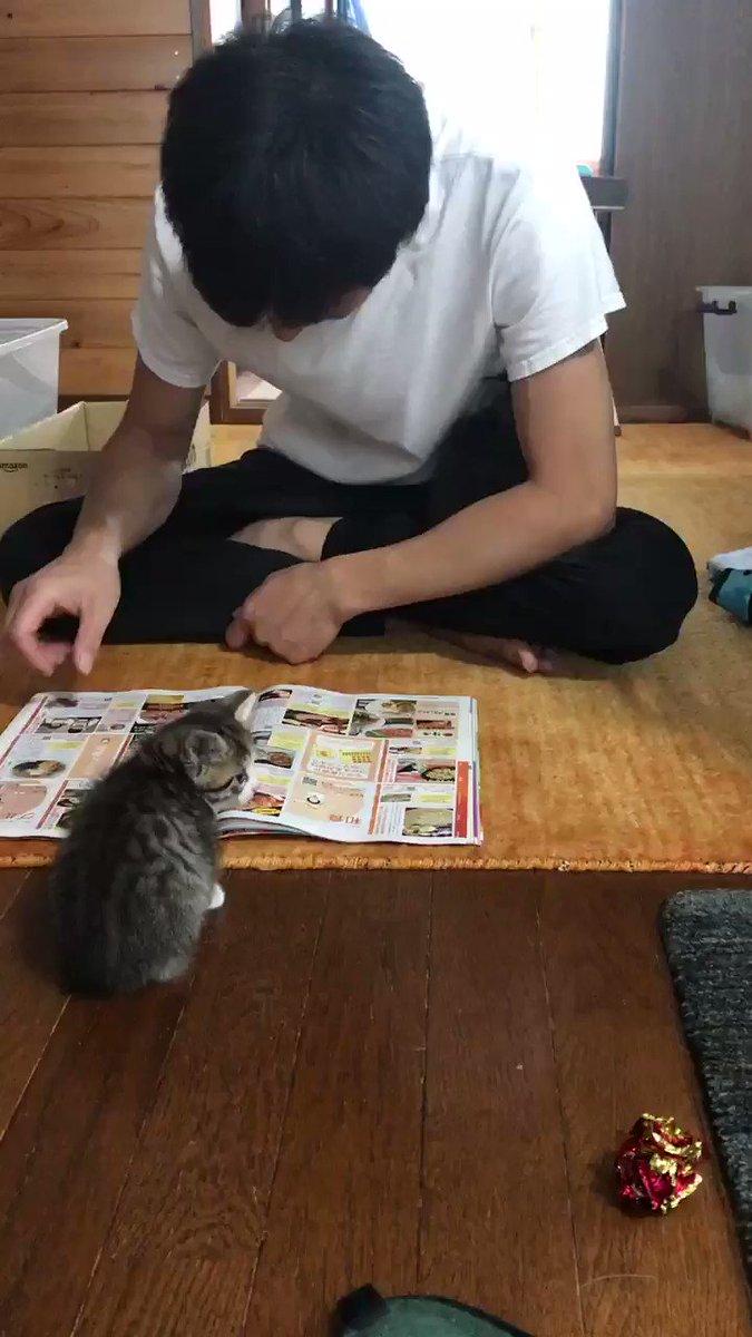 RT @bp6qmT6aPn7sB2D: 元々猫が苦手だったウチのダンナ。 何故か寄っていく子猫ちゃんズ😆 で、満更でもないダンナ😁 #猫 #子猫 https://t.co/h6kg0tCuna
